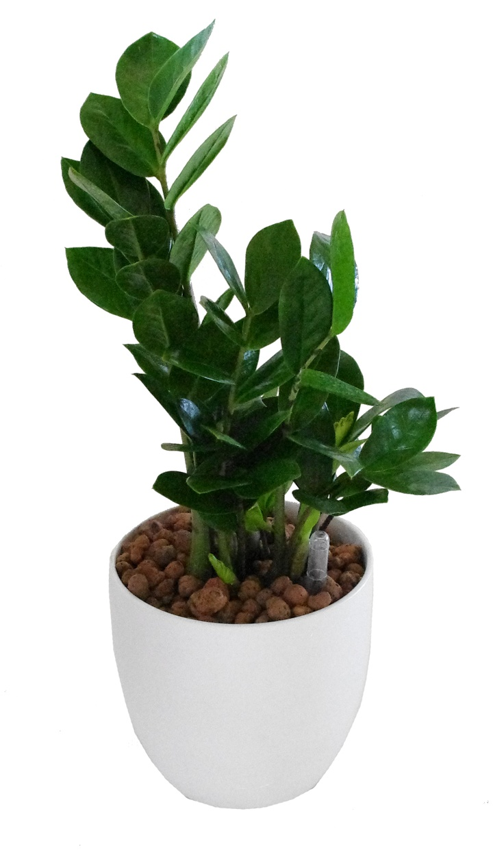 how to grow snake plant roots