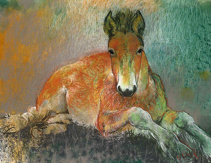 Veulen - Loes Botman pastels, pastelkrijt tekeningen