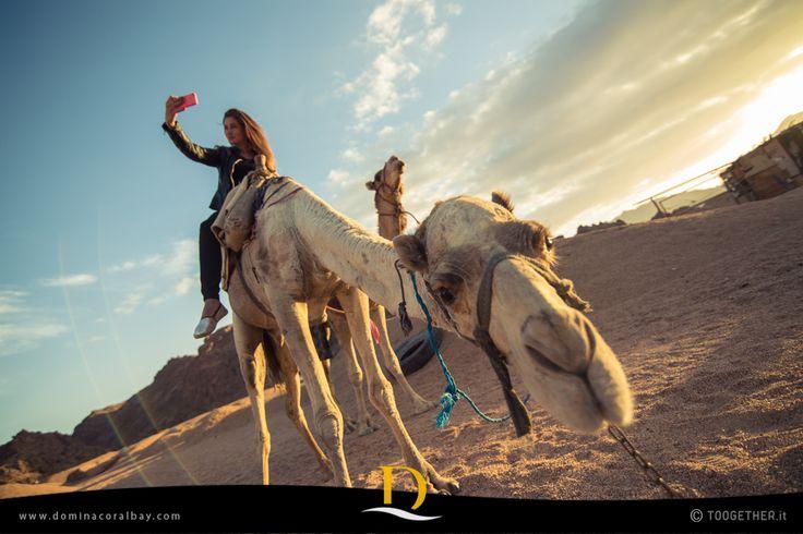 In jeep, bus o a dorso di cammello potrete conoscere le bellezze di Ras Mohamed, la riserva marina del Mar Rosso, ammirare le incredibili sfumature del Canyon Colorato o gustare un aromatico tè nel deserto.