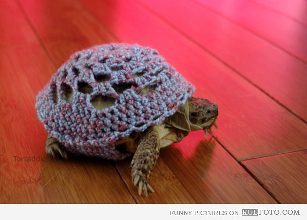 Knitting Pattern For Tortoise Jumper : Winter turtle - Funny turtle wearing knitted sweater. I know that this is som...