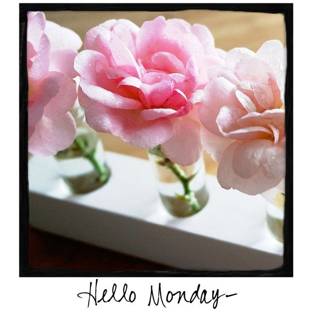 Hello Monday! Share this photo with your followers on Facebook!