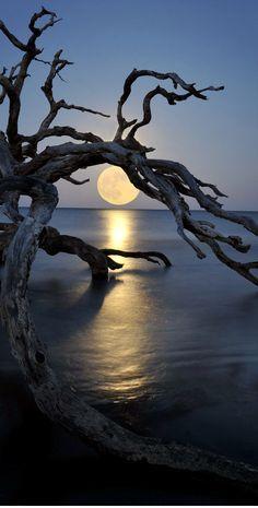 Full moon At Driftwood Beach, Jekyll Island, GA.......ERIE, BUT BEAUTIFUL