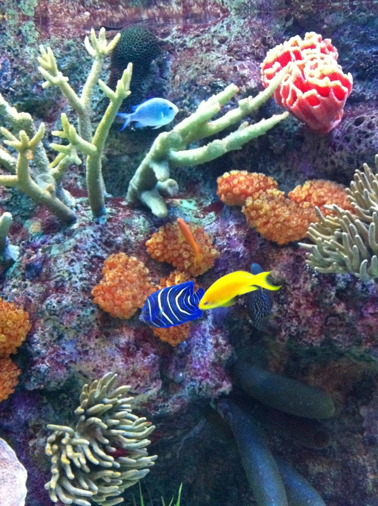 39 best images about chicago shedd aquarium on pinterest for Octopus fish tank