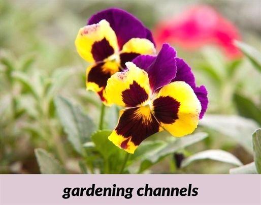 Gardening Channels 131 20180915175237 53 Craigslist Gardening Jobs Gardening Youtube U Vegetable Garden For Beginners Early Spring Flowers Gardening Tips