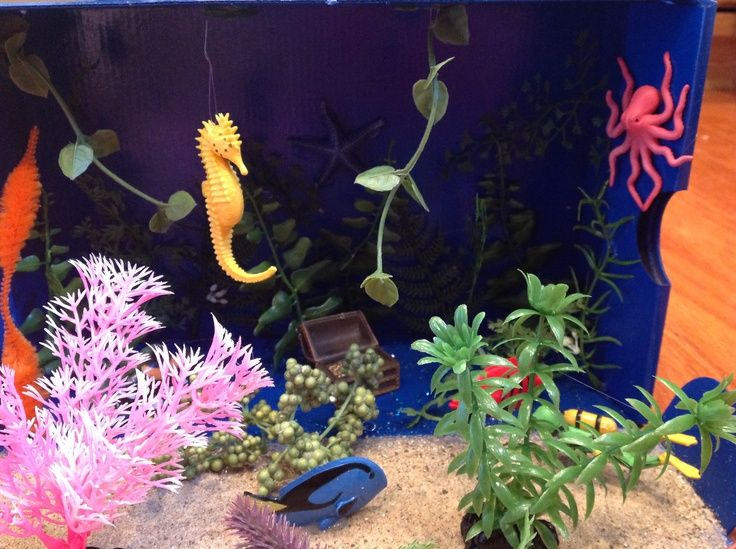 100+ Marine Ecosystem Diorama – yasminroohi