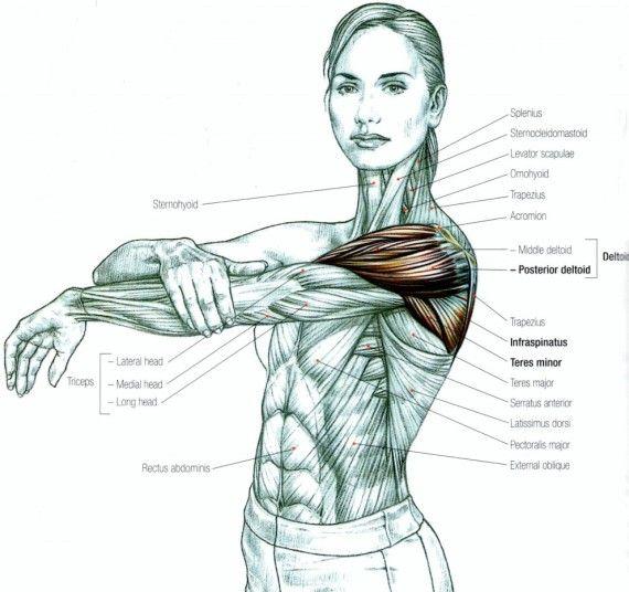 alongamento deltoide posterior