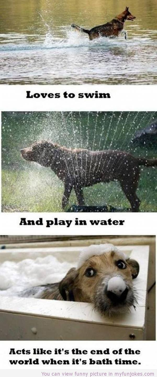 Funny dogs love to swim