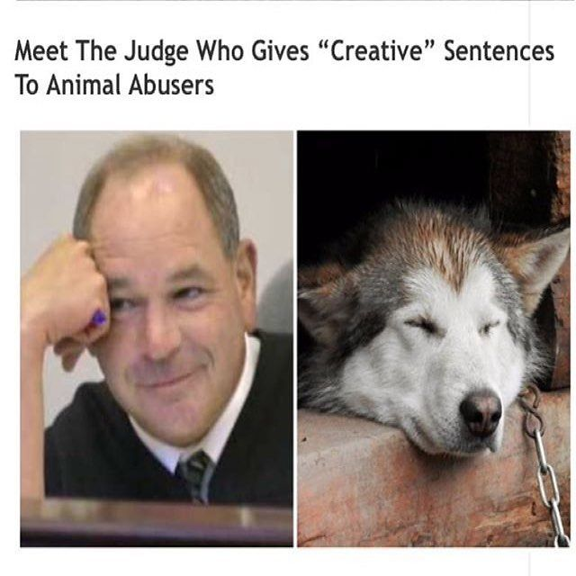 Love it!! love it!! love it!!.... need more judges like him!. #whatsgoodforthegoose..... Repost @chl0ster http://ift.tt/2tJBOt1 . Judge #MichaelCicconetti is no ordinary judge. When he dishes out sentences they usually come with a creative twist that he hopes will teach offenders a valuable lesson. Were particularly fond of the judges treatment of #animalabusers and #neglecters. From spending the day at a dump to a night alone in the wilderness Judge Mikes punishments make people think twice…