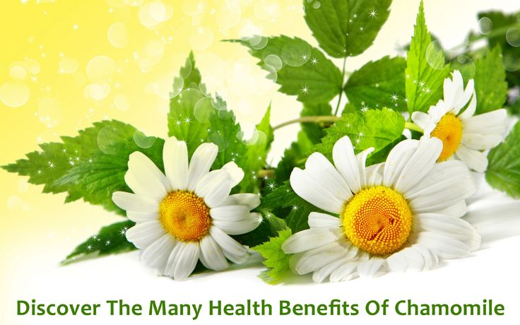 Chamomile was often used as a remedy for nausea, diarrhea, gas, anxiety, fevers, asthma, colic and a host of other conditions.    Most often, it was taken as a hot tea. For skin conditions such as hemorrhoids it was used topically.    The part of the plant that is used for healing and that tea is made from are the flowering tops. Many years before the availability of gas relief medicine, chamomile tea was a popular remedy.