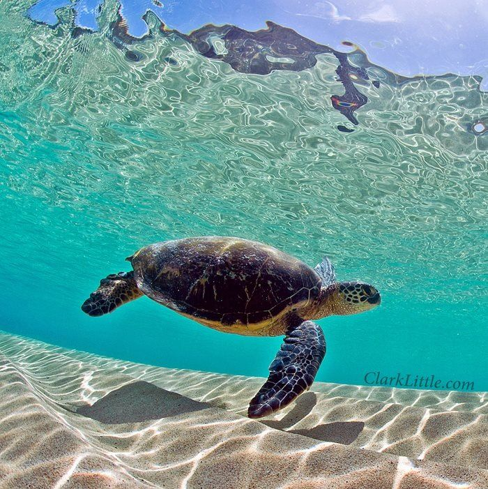 sand bar, sea turtle, & sunshine