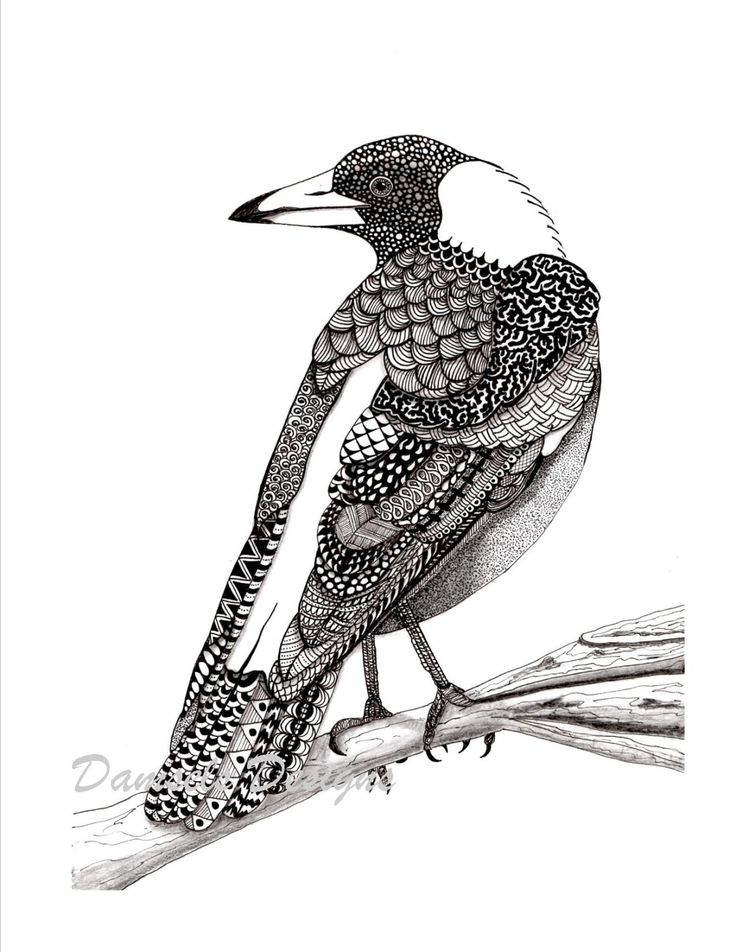 Australian magpie pattern art drawing by DamselsDesigns on Etsy