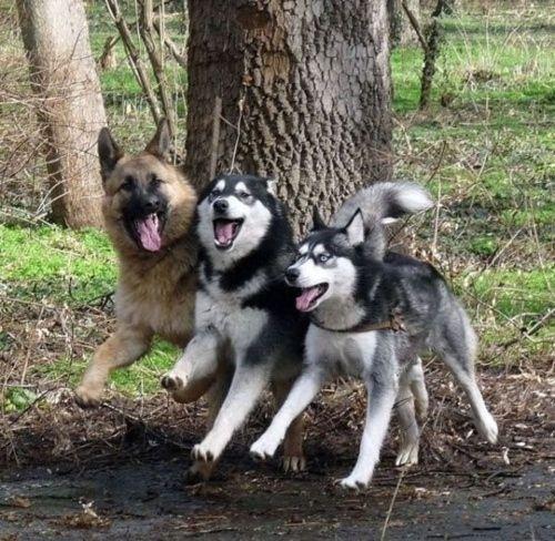 Doggies!!!!