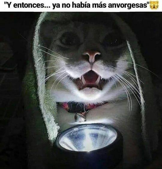 Ja wena po anvorgesa . . . . . . . #memesespañol #momazos #memeslatinos #memest…