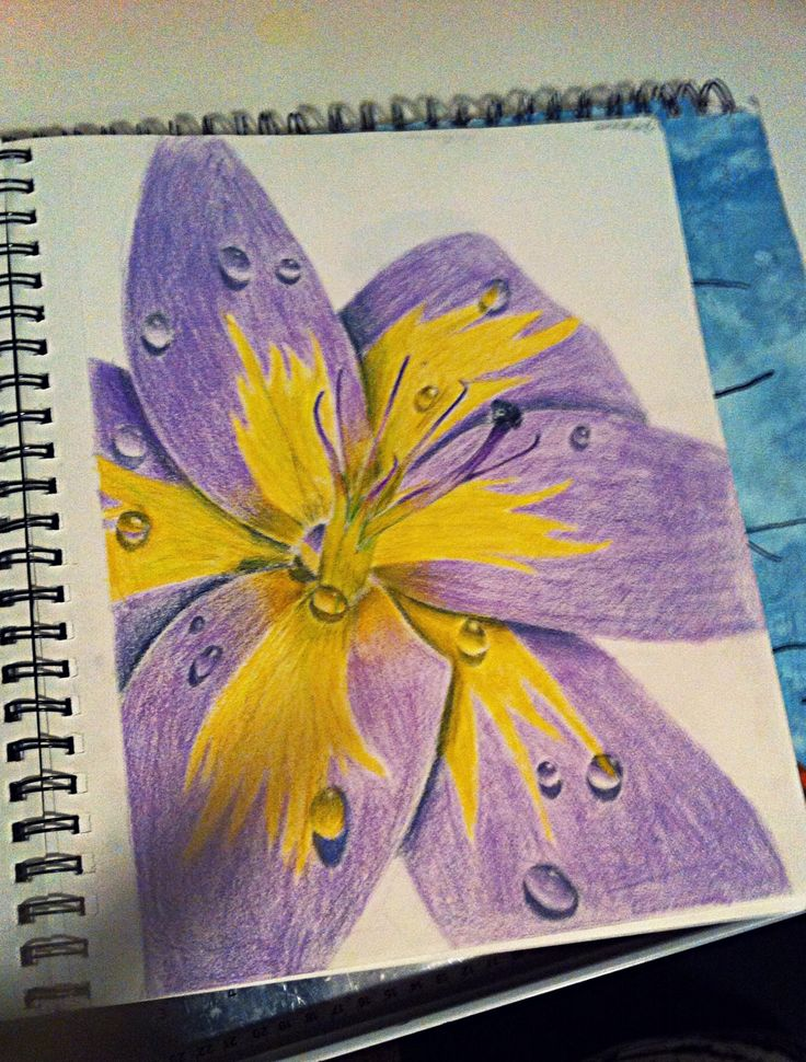 """Flower with dew drops"" By Emma Rock. Leave comments of any drawings you'd like to see, i'm always looking for ideas!"