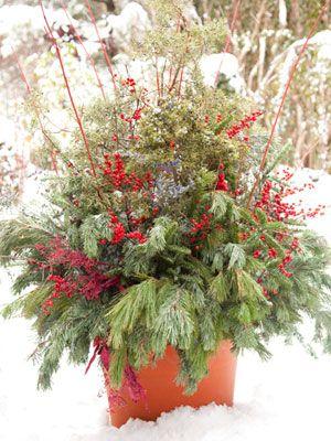 winter pot ideas - cardinal dogwood, fraser fir, white pine, scotch pine, winterberry holly, dried eucaplyptus and caspia