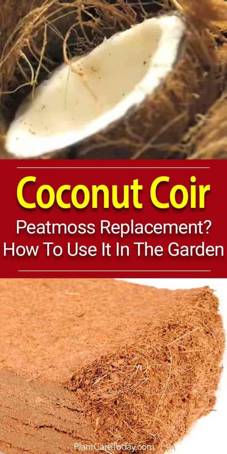 0c7ae4bbceac94ab6d78fb5a233f4f8a - How To Use Coconut Coir In Gardening