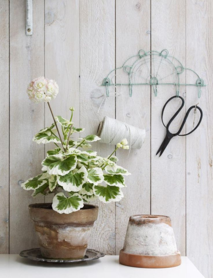 geranium in terracotta pots - spray with Stucco in a Can, let dry, sand till smooth and the finish you like best