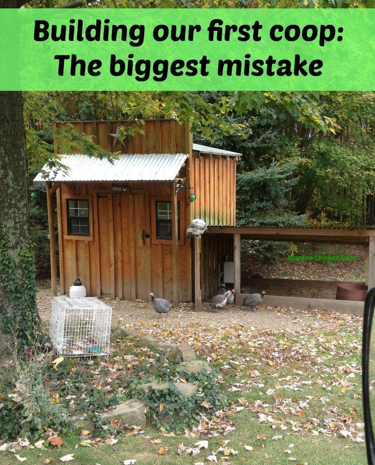 Chicken coop building mistakes