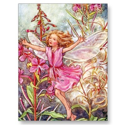 THE ROSE-BAY WILLOW-HERB FAIRY POST CARD by flower_fairies