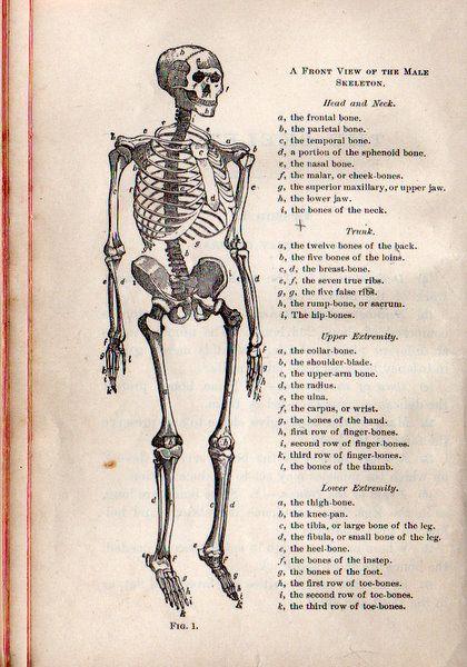 vintage halloween clipart book page skeleton