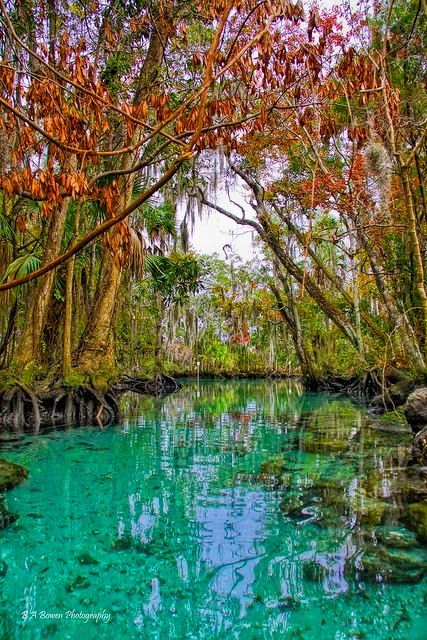 Three Sisters Springs - Crystal River, Florida - Most beautiful place in florida