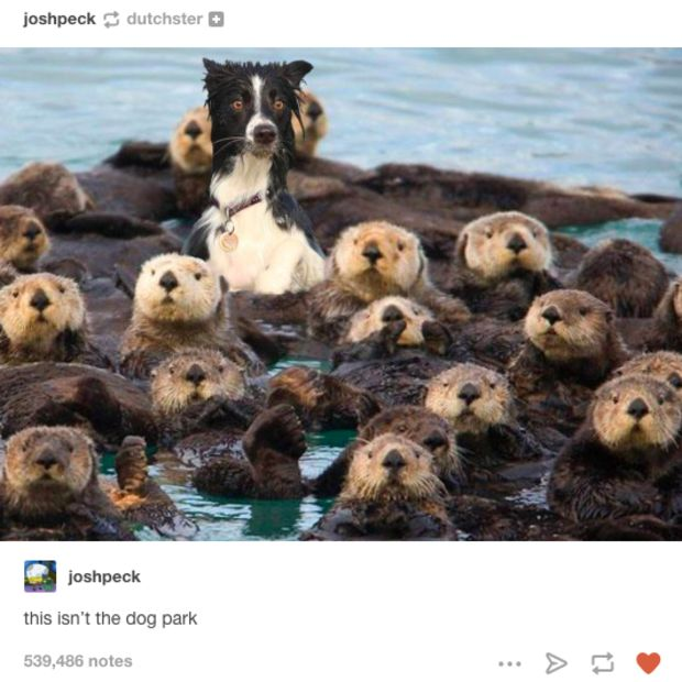 22 Dog Pictures That Will Never Stop Making You Laugh - BlazePress