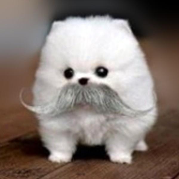 Cute Mustache Dog | Really Cute | Pinterest