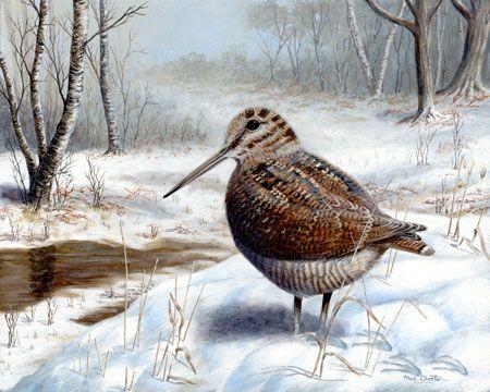 Woodcock in Winter