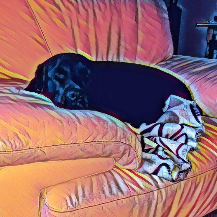 Let sleeping dogs lie #blackdog