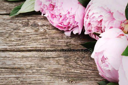 Картинки фиолетовые пионы, Стоковые Фотографии и Роялти-Фри Изображения фиолетовые пионы | Depositphotos®