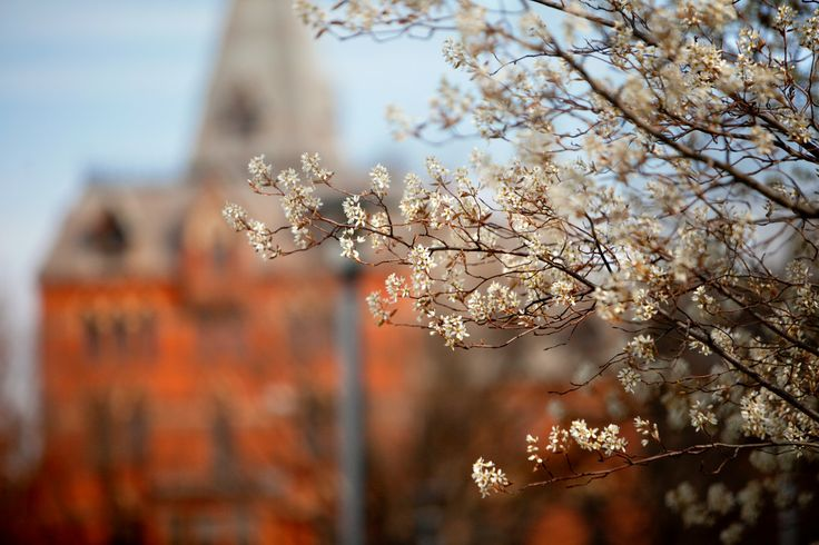 Budding trees near Sage Hall in spring. Photo by University Photography.