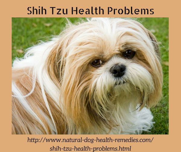 Common health problems in Shih Tzu dogs.