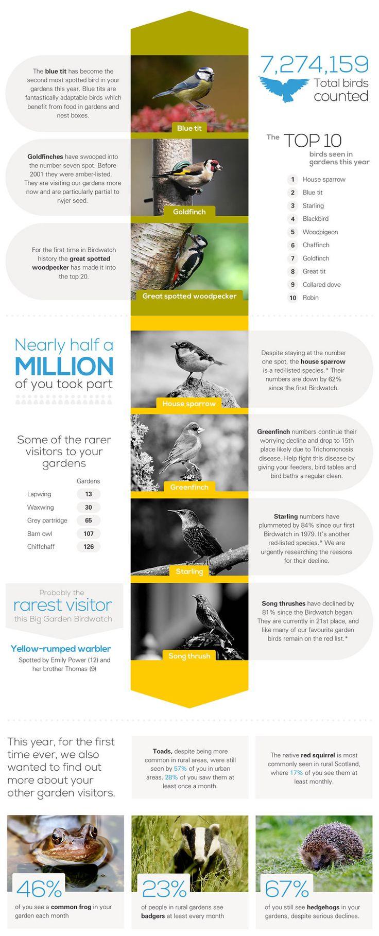 482 best biggardenbirdwatch images on pinterest big garden