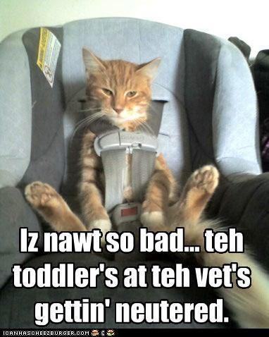 Cute animal memes clean - photo#22