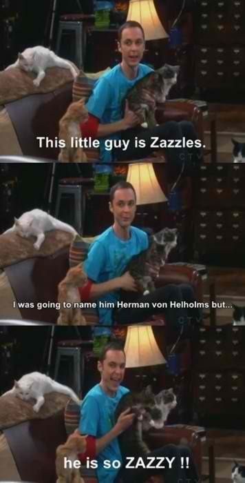 bazinga: Sheldon Cooper, Laugh, Funny Pictures, Big Bang Theory, Big Bangs Theory, Funny Quotes, Funny Photos, Crazy Cat Lady, White Cat