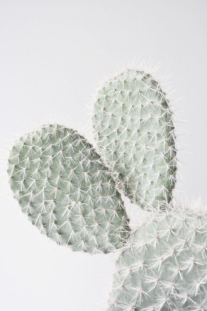 Plant Series - Studio Joop