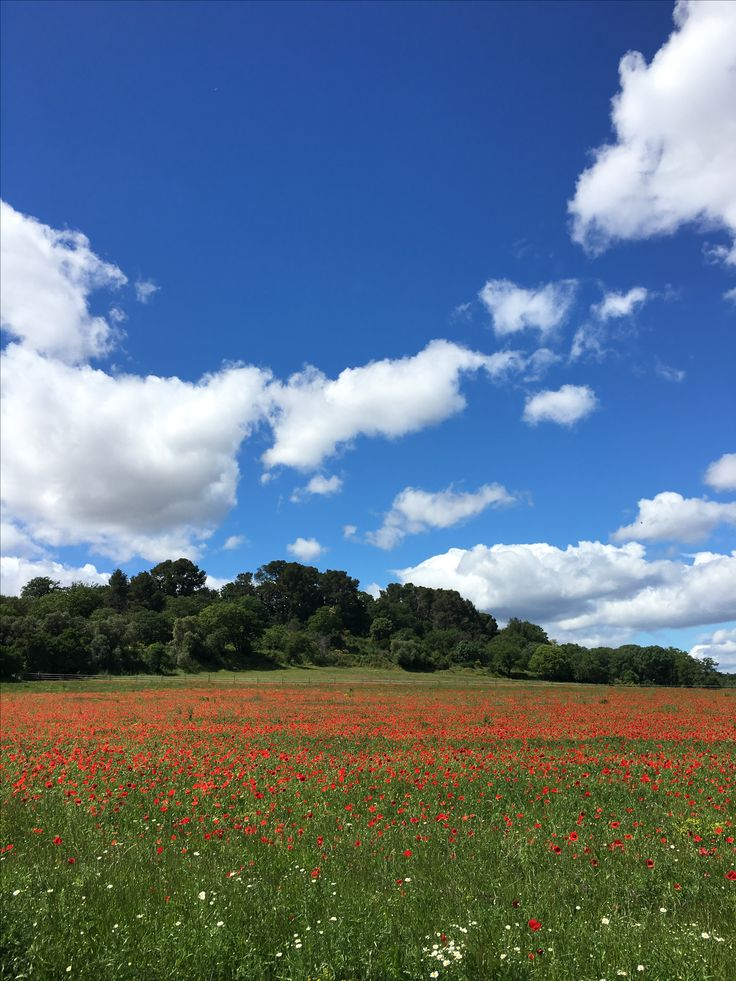 Field covered in wild poppies on our cycling route