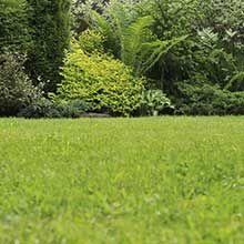 Semer du gazon : semer du gazon demande une attention constante, spécialement en ce qui concerne les apports en eau – Tout sur Ooreka.fr