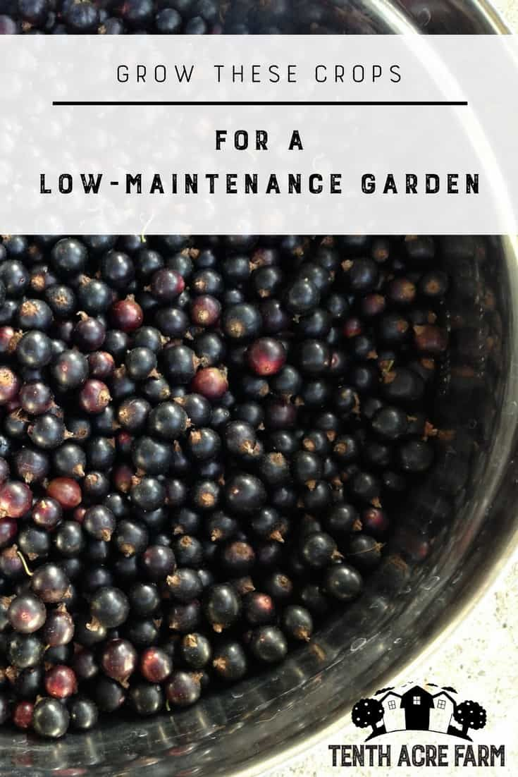 Grow These Crops for a Low-Maintenance Garden: Do you need a low-maintenance garden to fit your lifestyle? Reap an abundant harvest with less work by growing these crops. #gardening