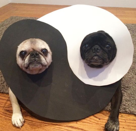 Best representative of yin and yang I've ever seen!