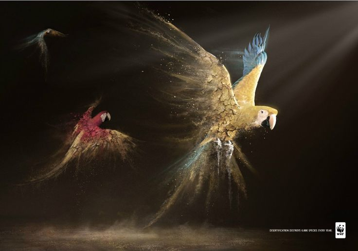 """""""Desertification destroys 6.000 species every year."""" for #WWF by Contrapunto BBDO Madrid. #parrots #birds #endangered #species #good #ad"""