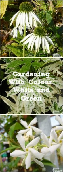 Weu0027ve Created The Ultimate Guide To Using White As A Gentle Balance Against  A. Plant NurseryWhite GardensGreen ...
