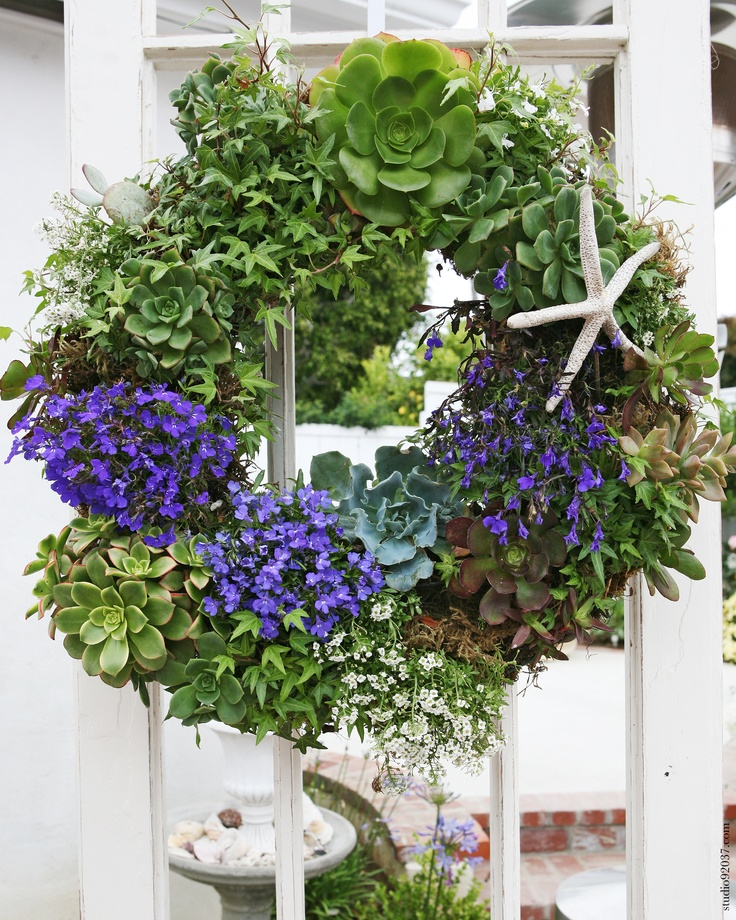 Living wreath with ivy, succulents, lobelia and add couple of coastal pieces, love it!