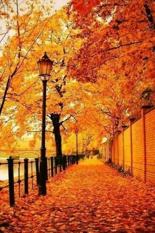 Autumn is golden