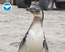 Demand Justice for 5 Endangered Penguins Killed at Peru Rescue Center - The Petition Site