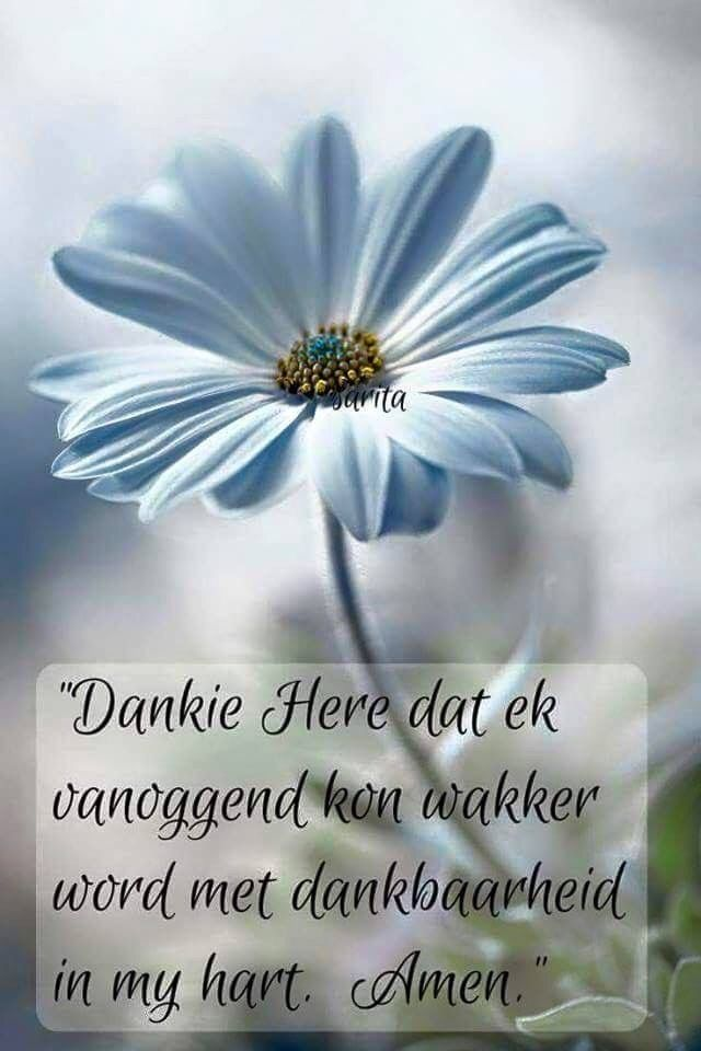 Dankie Here