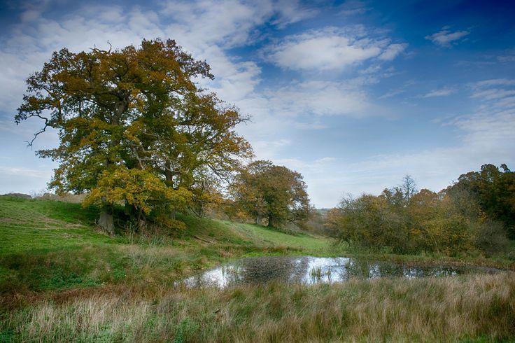 https://flic.kr/p/ZVKjYN | Gregynog Hall gardens, Tregynon, Nr Newtown, Powys, Wales, UK 30.10.17 (W10 162) https://www.facebook.com/welshphotographs/