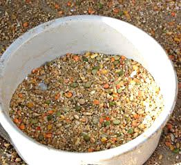 organic chicken feed recipe