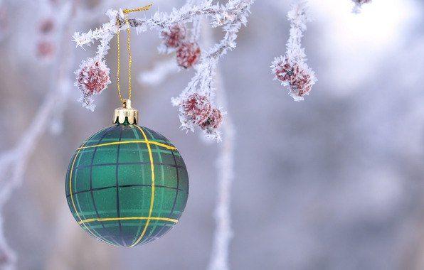 interier, design, интерьер, дизайн, новогоднее, оформление, магазин, витрина, экстерьер, новый год, елка, связной