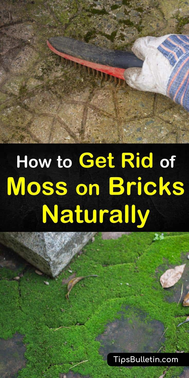 0c822640c3dde63949782d6db0680fb7 - How To Get Rid Of Moss In Grass Naturally